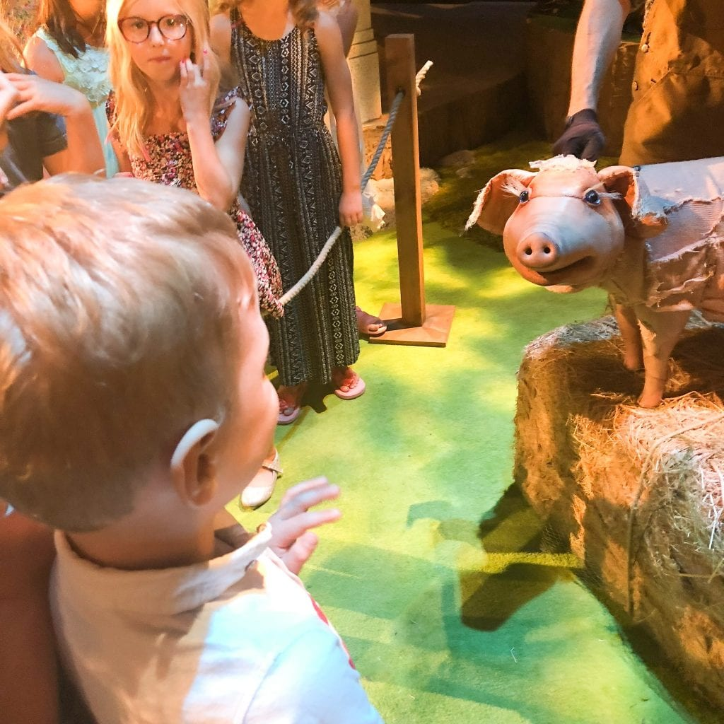 Oliver mesmerised by Babe, The Sheep-pig