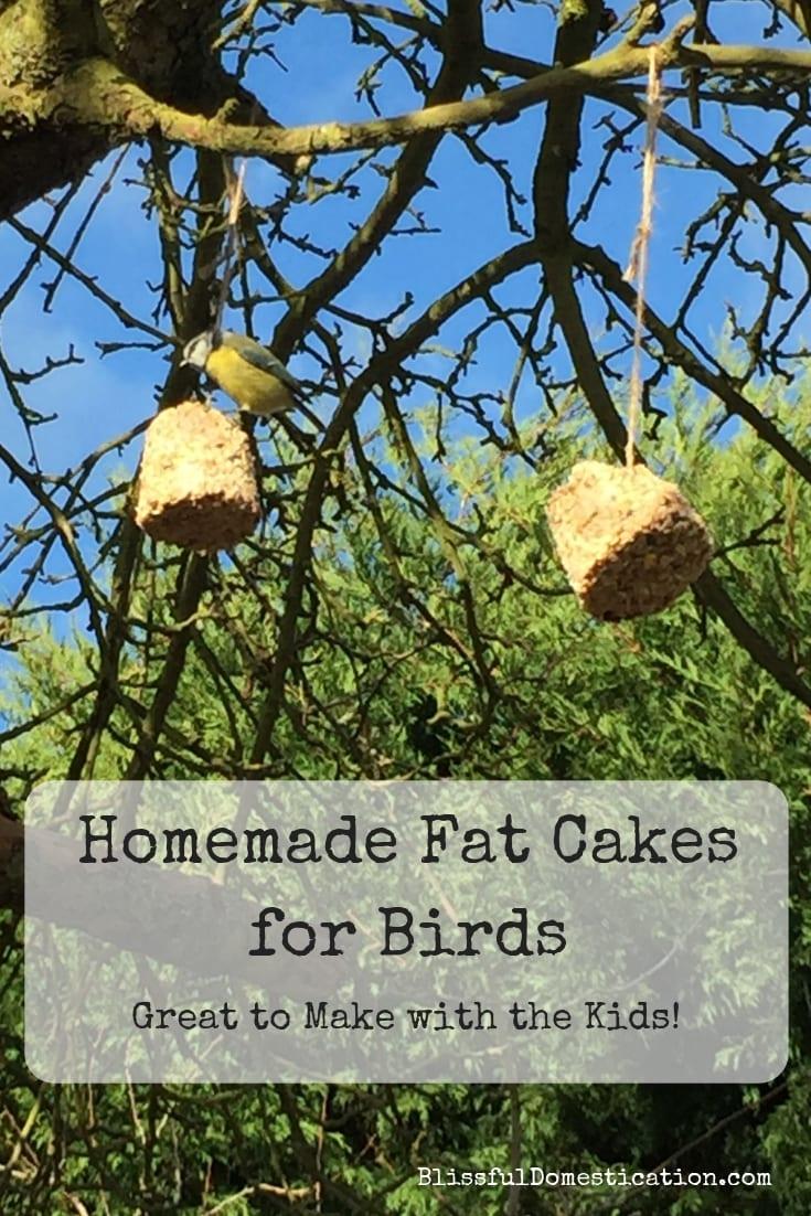 Homemade Fat Balls for Birds