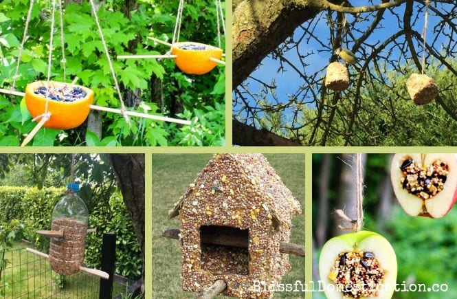 Featured image of Homemade Bird Feeders Kids Can Make