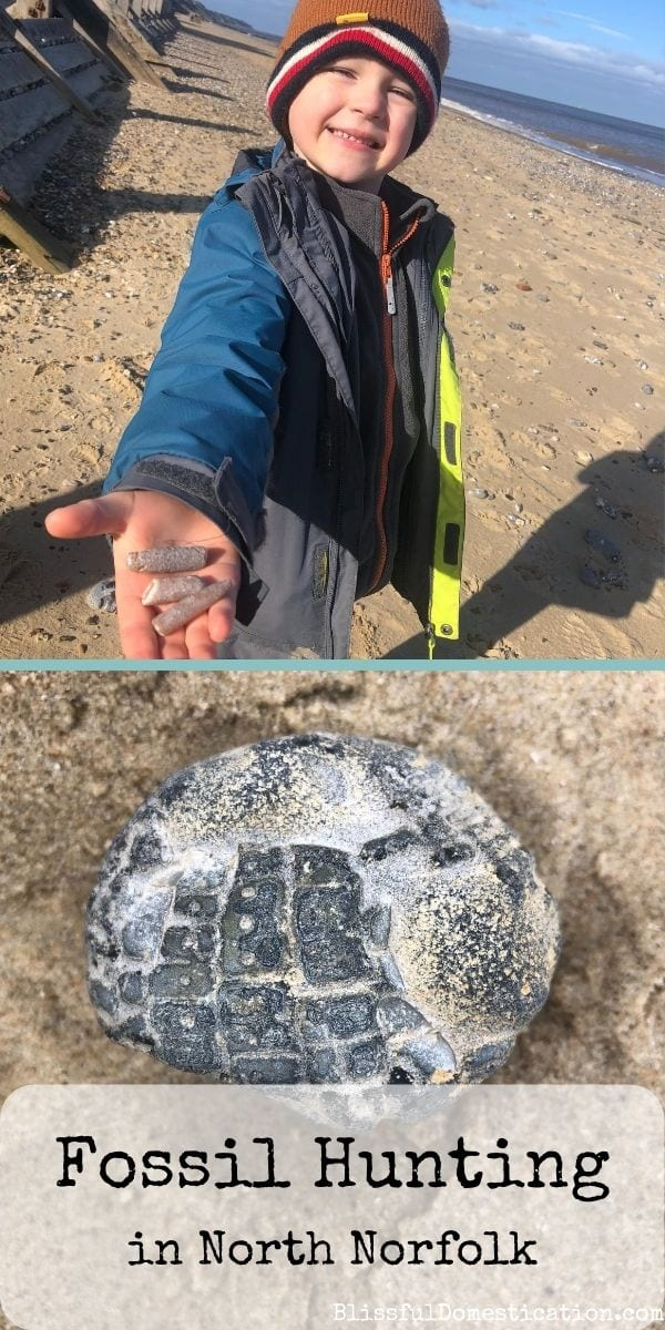 Fossil hunting in North Norfolk pin