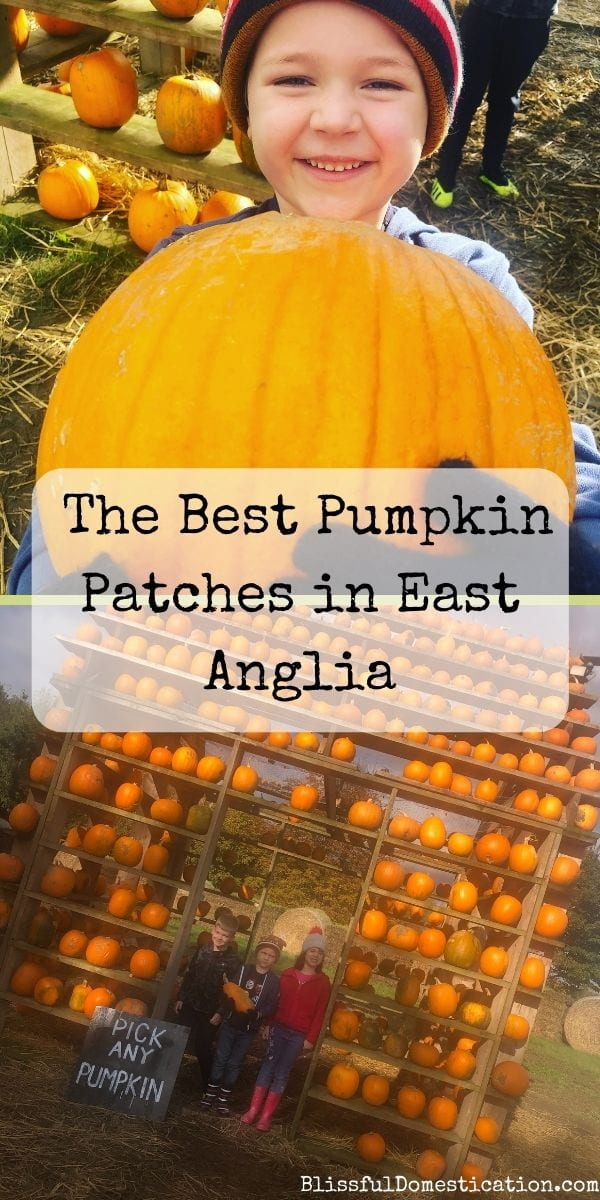 Pumpkin patches in East Anglia pin